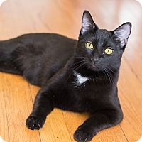 Adopt A Pet :: Regan - Chicago, IL
