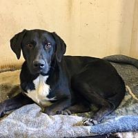 Adopt A Pet :: Pablo - Covelo, CA