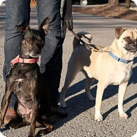 Adopt A Pet :: Bucky and Milo (Only Together) - Allentown, PA