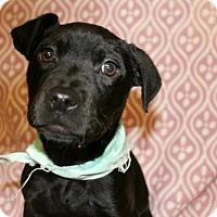 Adopt A Pet :: PARVATI - Bryan, TX