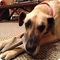 Adopt A Pet :: Nikko - Stevens Point, WI