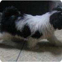 Adopt A Pet :: Stewie - Antioch, IL