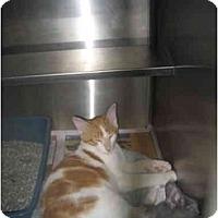 Adopt A Pet :: Sharpy - Lombard, IL