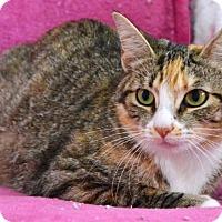 Adopt A Pet :: Mattie - Davis, CA