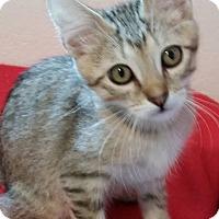 Adopt A Pet :: Hook - St. Louis, MO