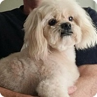Adopt A Pet :: Frosty - SO CALIF, CA