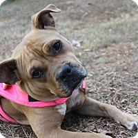 Adopt A Pet :: Sassy - Snellville, GA