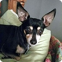 Adopt A Pet :: Isabella - Knoxville, TN