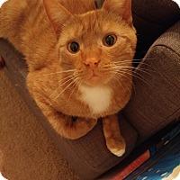 Adopt A Pet :: Todd - Athens, GA