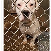 Adopt A Pet :: Nyati - ADOPTED! - Zanesville, OH