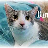 Adopt A Pet :: Barney - Wichita Falls, TX