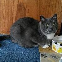 Adopt A Pet :: Scone - Queenstown, MD
