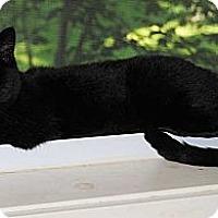 Adopt A Pet :: Annisette (Annie) - Sanford, ME