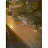 Adopt A Pet :: Wiley - Owasso, OK