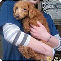 Adopt A Pet :: JERZY - Rossford, OH
