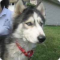 Adopt A Pet :: Rae Rae - Orange Park, FL