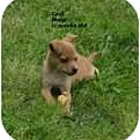 Adopt A Pet :: Cecil - New Boston, NH