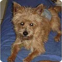 Adopt A Pet :: Bruno - Miami, FL