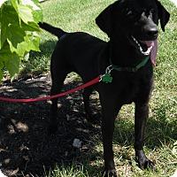 Adopt A Pet :: Pilar - Lewisville, IN