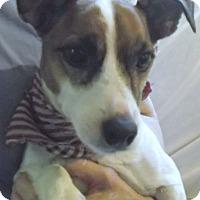 Adopt A Pet :: Alex - Foster, RI