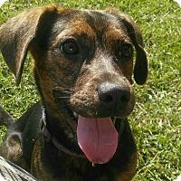 Adopt A Pet :: Jewels - Burlington, NJ