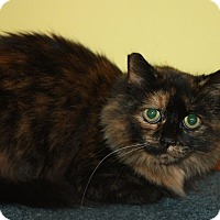 Adopt A Pet :: Trixie (LE) - Little Falls, NJ