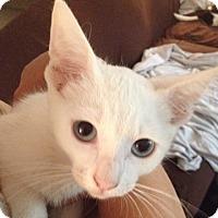 Adopt A Pet :: Seeba - North Highlands, CA