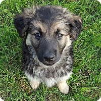 Adopt A Pet :: TROOPER - Winnipeg, MB