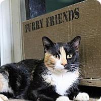 Adopt A Pet :: B'Dazzled - West Des Moines, IA