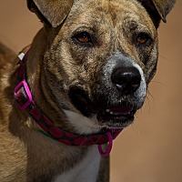 Adopt A Pet :: Deedee - Westminster, CA
