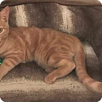 Adopt A Pet :: Hadley - Houston, TX
