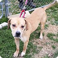 Adopt A Pet :: Kate - Richmond, VA