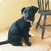 Adopt A Pet :: Hugh - ST LOUIS, MO
