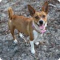 Adopt A Pet :: Mia - New Smyrna Beach, FL