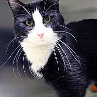 Adopt A Pet :: Tux - Paris, ME