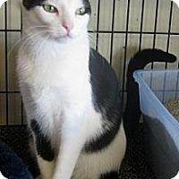 Adopt A Pet :: MC - Dallas, TX