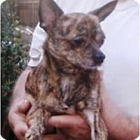Adopt A Pet :: Scampers - Duluth, GA