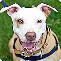 Adopt A Pet :: Tillie - Hillsborough, NJ