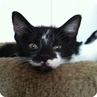 Adopt A Pet :: Piper - Trevose, PA