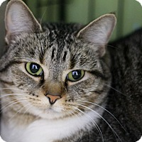Adopt A Pet :: Savina - Chicago, IL