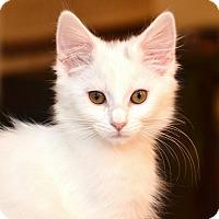 Adopt A Pet :: Poppy Seed - Davis, CA