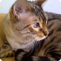 Adopt A Pet :: Shak - Laguna Woods, CA