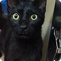 Adopt A Pet :: Jabari - Morganton, NC