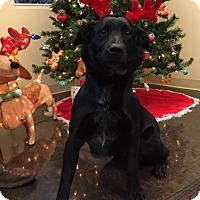 Adopt A Pet :: Blackberry - Greensboro, GA