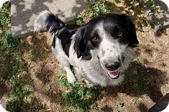 Basset Hound/Cocker Spaniel Mix Dog for adoption in Salt Lake City, Utah - Mitzie  NAB (Sadie)