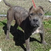 Adopt A Pet :: Bonnie - Olive Branch, MS