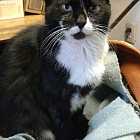 Adopt A Pet :: Sasha (adult female) - Harrisburg, PA