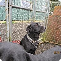 Adopt A Pet :: Bo - Tillamook, OR