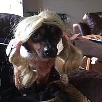 Adopt A Pet :: Fiona - Sayville, NY