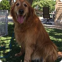 Adopt A Pet :: Ricky - Temecula, CA